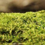 Wolf Garten Moosvernichter und Rasendünger