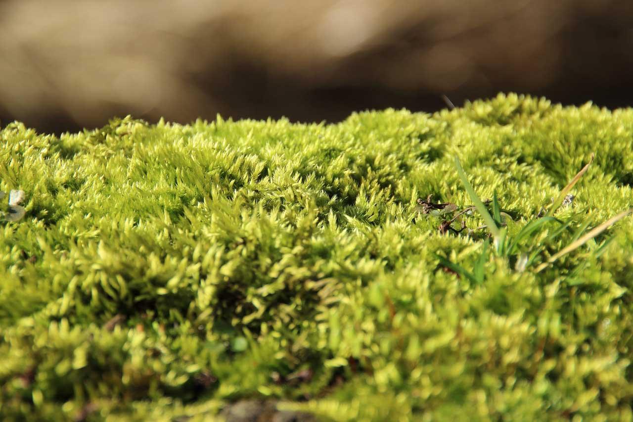 Photo of Moosvernichter – Im Rasen effektiv Moos bekämpfen