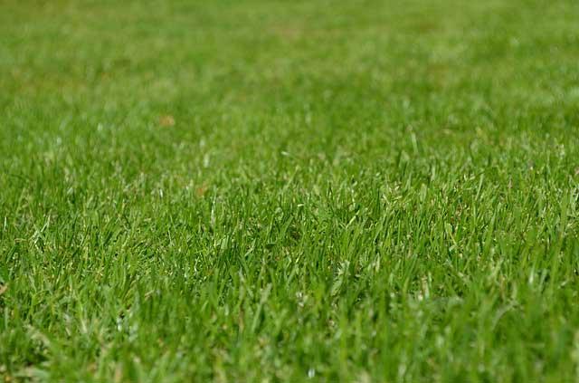 Rasendünger Test - Für den fließendes Gras-Teppich