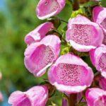 Giftige Pflanzen - So erkennen Sie sie