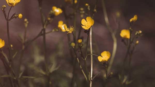 Giftige Pflanzen Bilder - So erkennen Sie diese