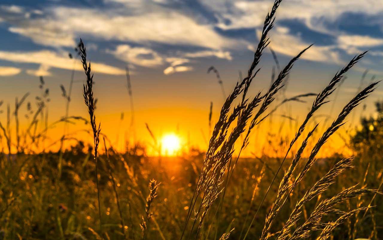Gräser - Aufwertung des Gartens mit einfachen Mitteln