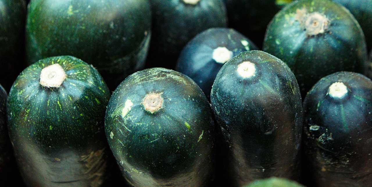 Photo of Gurken pflanzen
