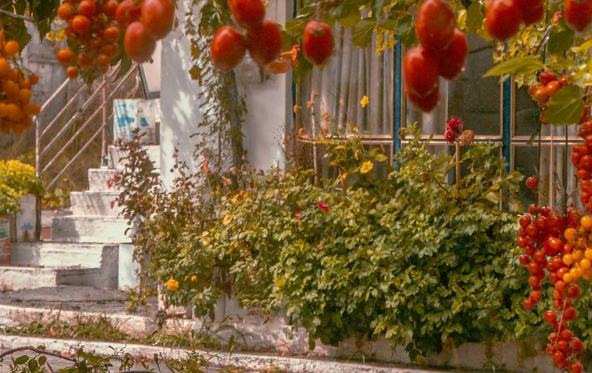 Photo of Mediterraner Garten