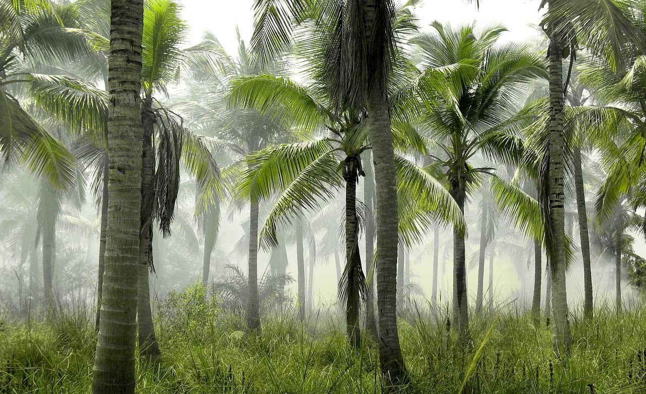 Palmengarten - Wohlfühloase für Zuhause