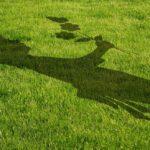 Rasen säen - Anleitung und Ratgeber