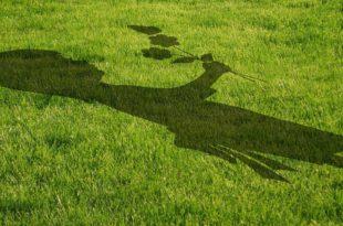 Rasenpflaster verlegen bei gestressten Rasenflächen