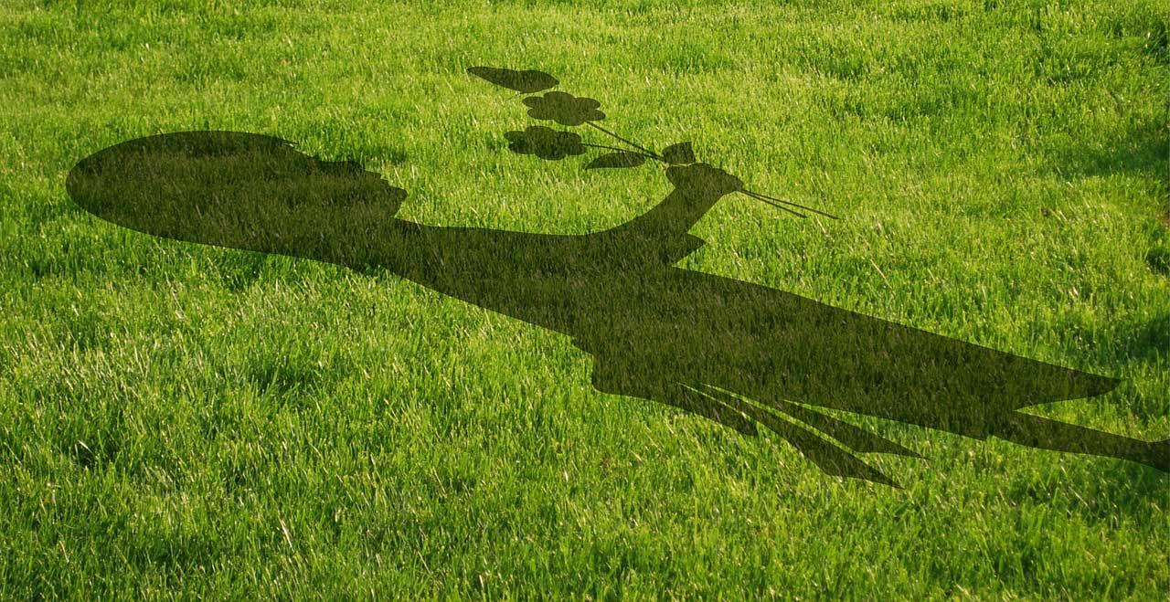 Rasenpflaster verlegen und unschöne Stellen im Rasen lückenlos ausbessern.