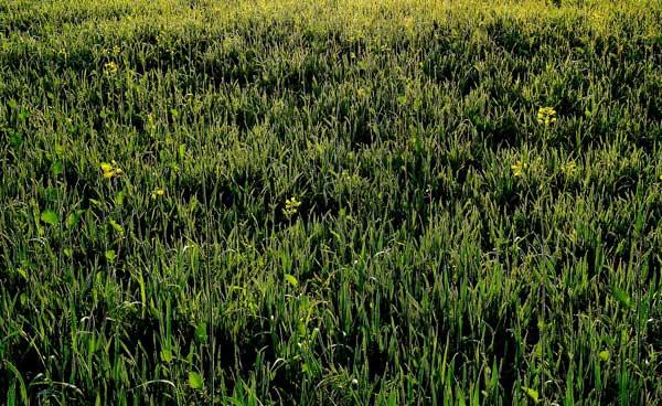 Rasenpflaster - Für den nahtlos gepflegten Rasen
