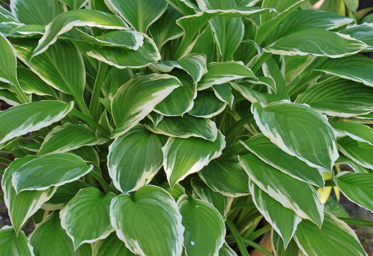 Photo of Schattenpflanzen – Diese Arten sollten Sie kennen