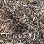 Rasensamen Nachsaat GF Regeneration Grass Test
