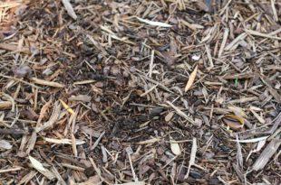 Rasen mulchen - Vorteile und Nachteile