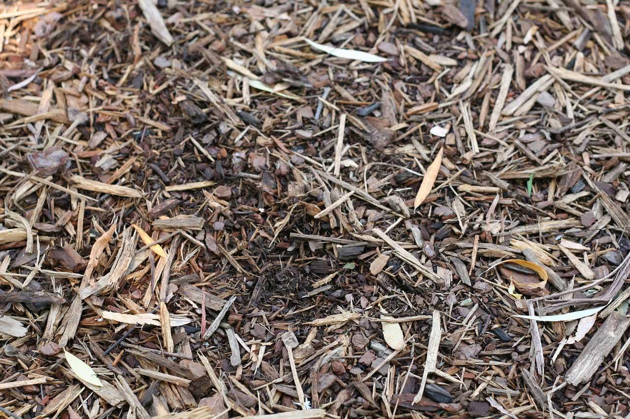 Rasen mulchen - ja oder nein?