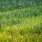 Rasen sähen - so geht es richtig.