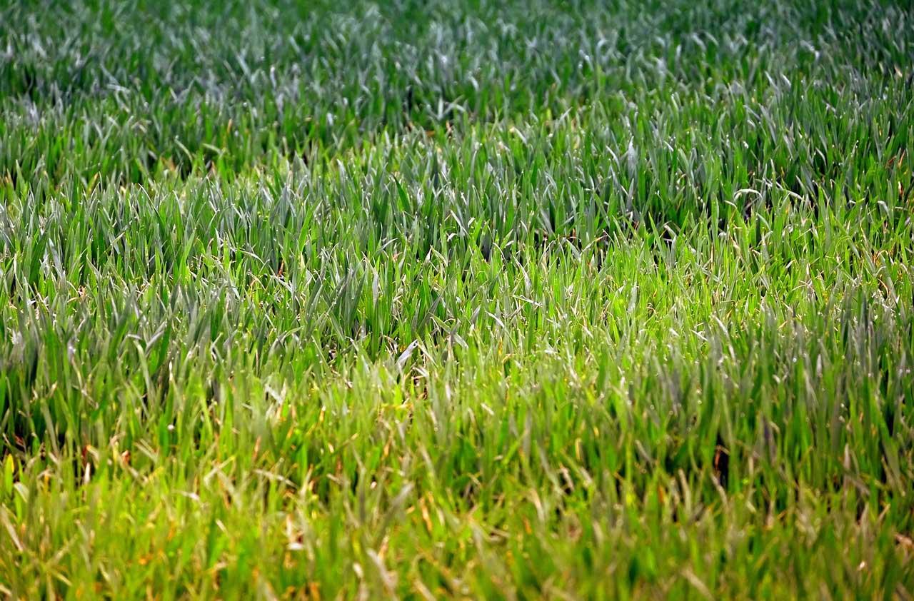 Lieblings Rasenerde als Grundlage für den perfekten Rasen - Mein Garten #ZS_09