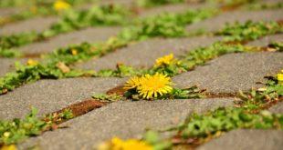 Rasenkantensteine verlegen – So einfach funktioniert es