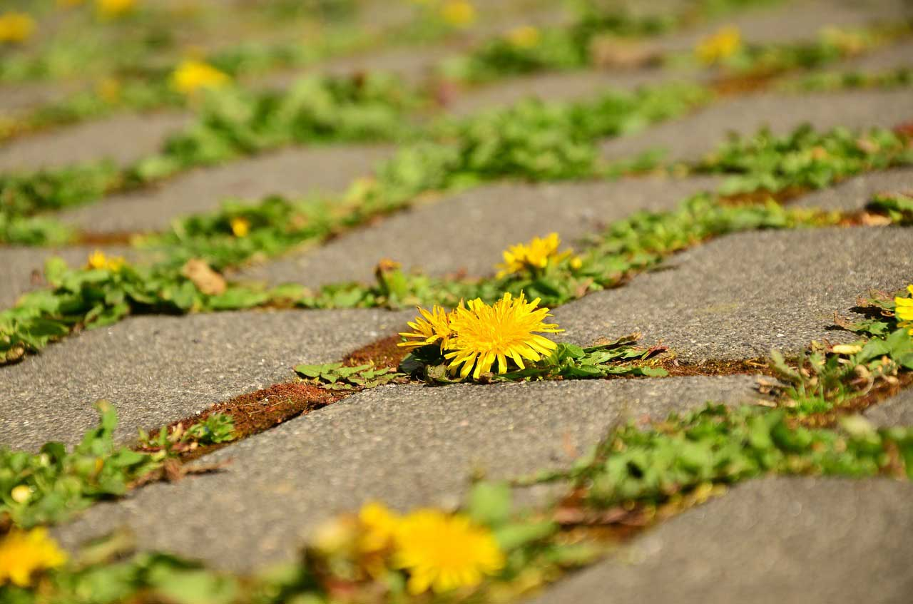 Rasenkantensteine verlegen - Anleitung zum selbermachen
