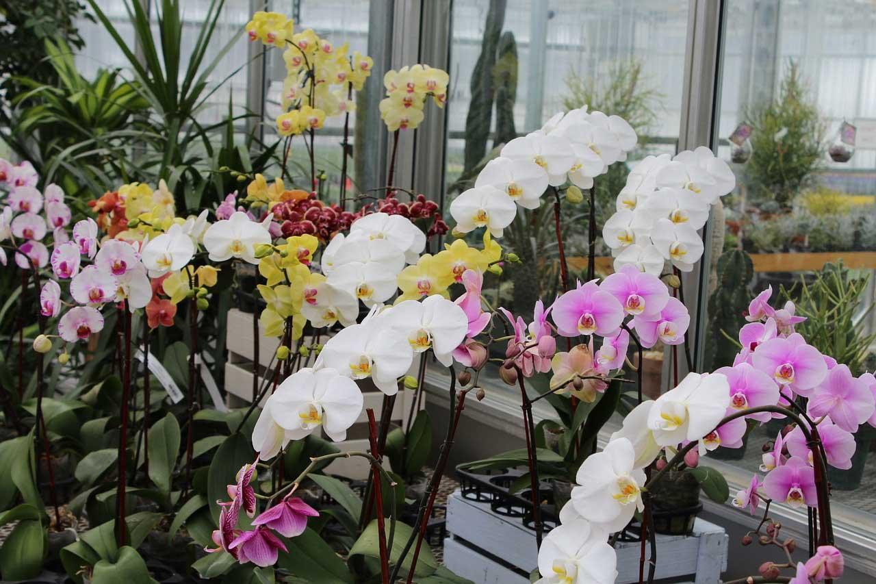 Orchideen schneiden - so wird es gemacht.