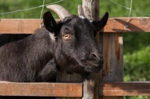 Tierhaltung im eigenen Garten