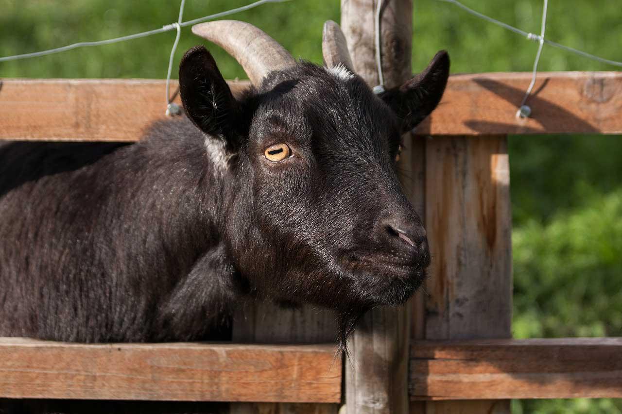 Photo of Tierhaltung im eigenen Garten – Mehr Leben im eigenen Grün