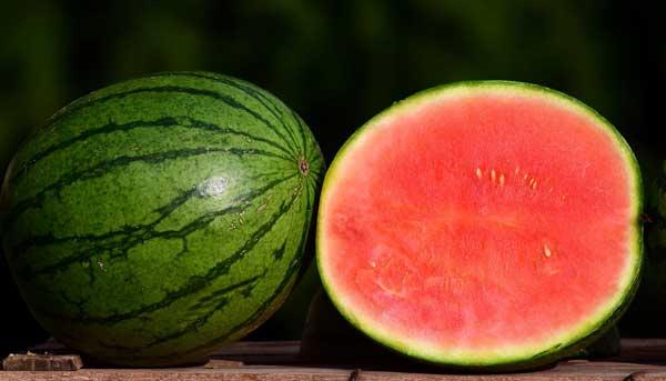 Kürbis - Melone