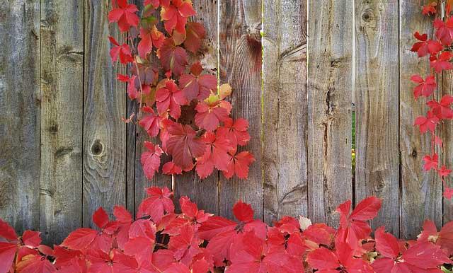 Photo of Sichtschutzelemente aus Holz für kleine Reihenhausgärten