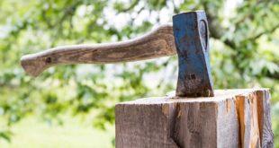Wann ist eine Baumfällgenehmigung erforderlich?