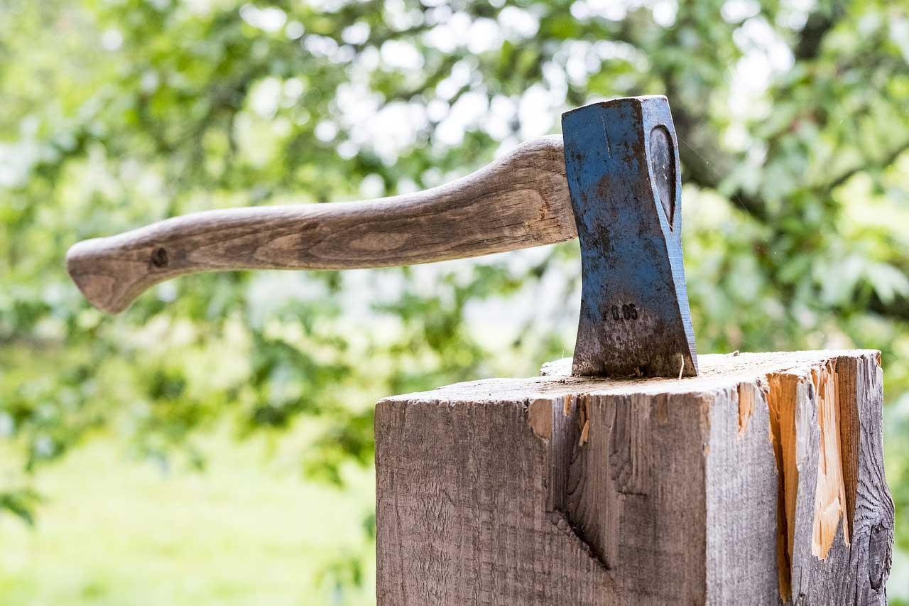 Photo of Wann ist eine Baumfällgenehmigung erforderlich?
