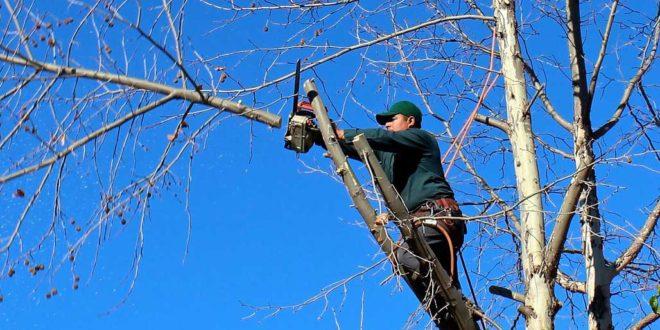 Holzfällen- so machen Sie es richtig!