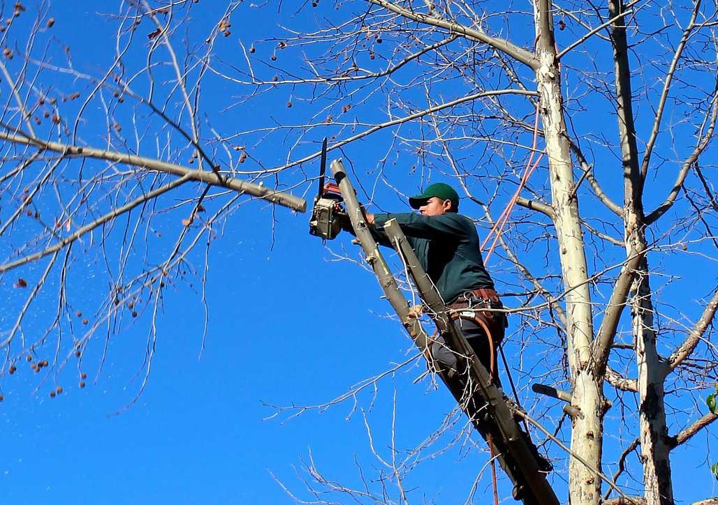 Photo of Holzfällen- so machen Sie es richtig!