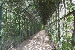 Laubengang Architektur - begrünte Wege im Schatten