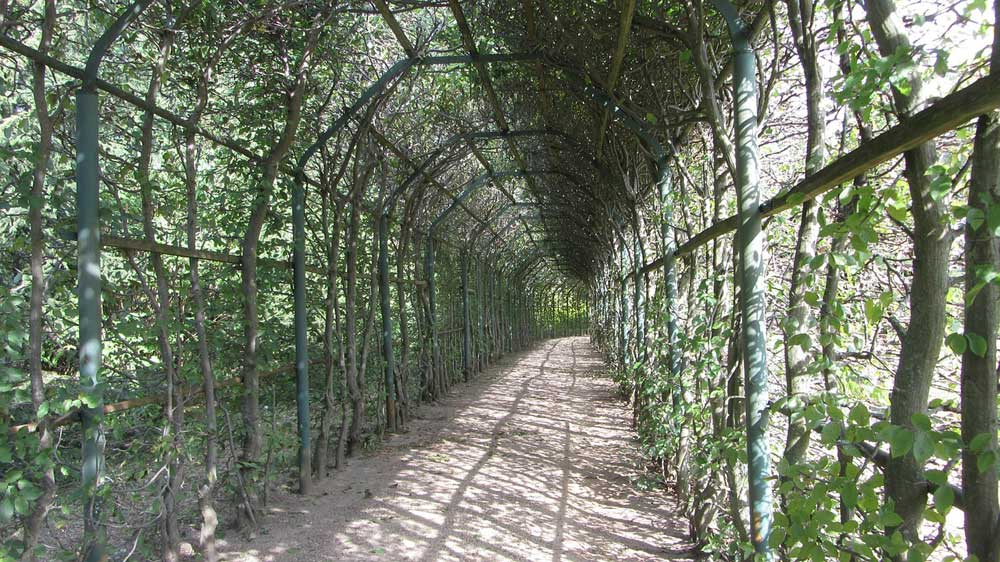 Laubengang – Alles Wissenswerte zur grünen Oase
