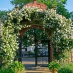Ein Rosenbogen mit Tür – Wissenswertes und mehr