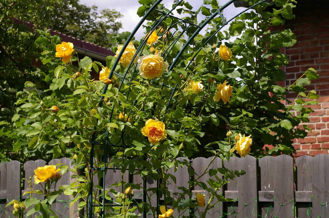 Beliebt Bevorzugt Rosenbogen - stabil und massiv aus Holz, Eisen oder verzinkt &YG_87
