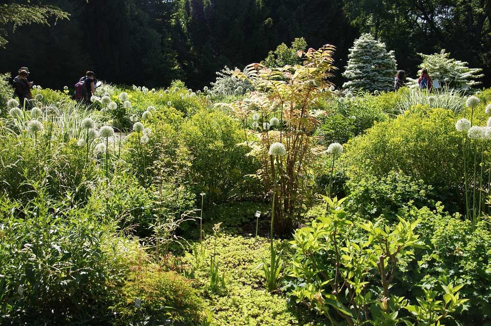 Der Staudenhalter – Wissenswertes zur nützlichen Pflanzenstütze