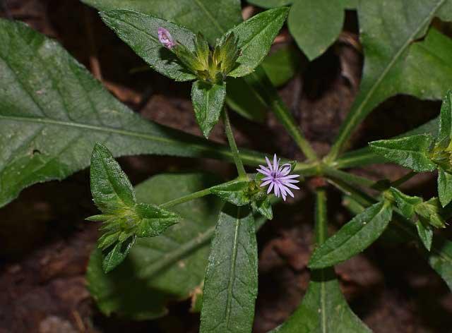 Photo of Hydropflanzen zur Raumbegrünung