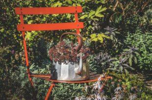 So wird der Garten fit für den Winter: Gartenpflege im Herbst