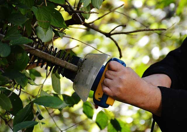 Auch hartnäckige Büsche lassen sich mit einer motorisierten Heckenschere gut schneiden.