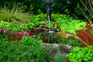 Gartenteich - So legen Sie einen Folien-Teich an