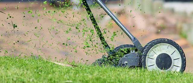 Photo of Den Rasen fit für den Frühling machen