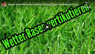 Bei welchem Wetter Rasen vertikutieren