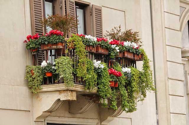 Balkonpflanzen - pflegeleicht sollten sie sein