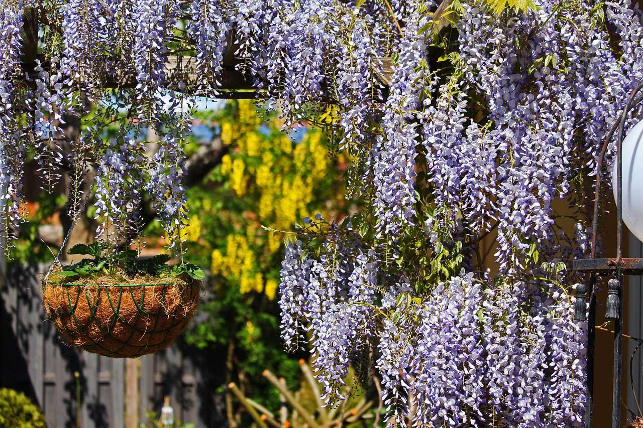Kletterpflanzen Winterhart Und Robust Mein Garten 2020