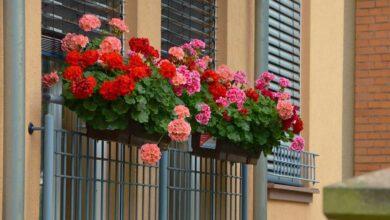 Diese Pflanzen eignen sich für den Balkon.