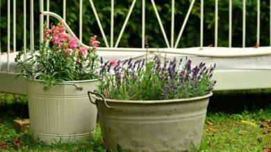 Pflanzen für Kübel werden immer beliebter als Dekorationselemente im Vorgarten.