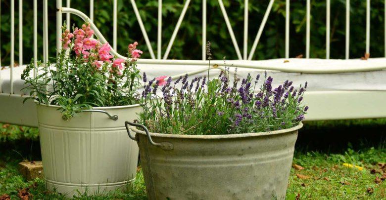 Photo of Pflanzen für Kübel – Dekoration auf Balkon & Terrasse