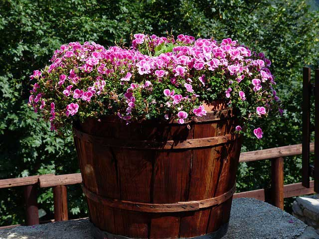 Pflanzen für Kübel mit viel Sonne