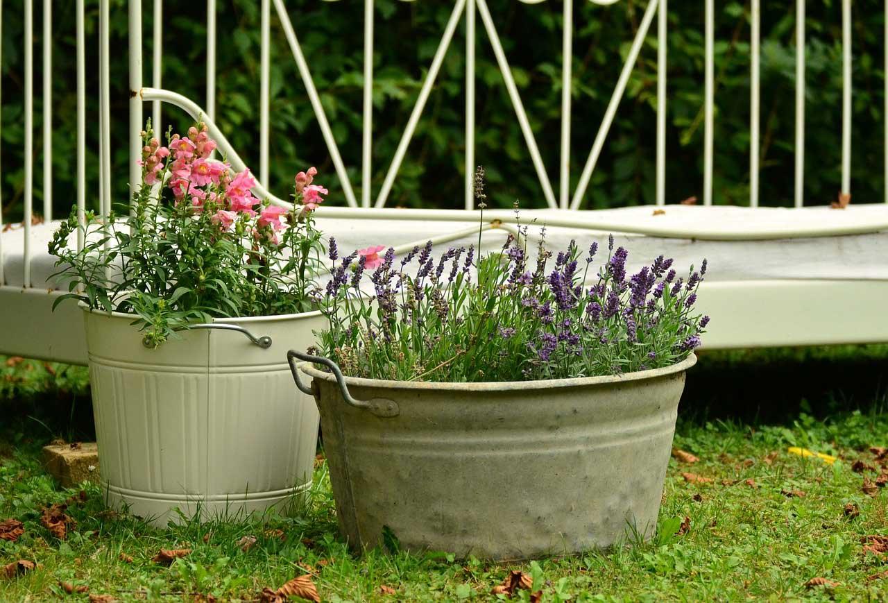 Pflanzen Fur Kubel Dekorativ Fur Hauseingang Balkon Terrasse