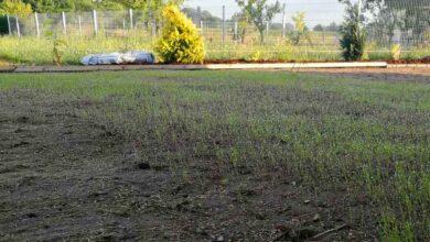 Wenn der vertrockene Rasen nicht mehr zu retten ist, lohnt sich oft eine komplette Neuanlage des Rasen.