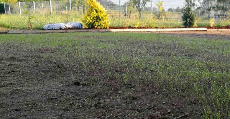Photo of Vertrockneter Rasen – reparieren oder neu säen?